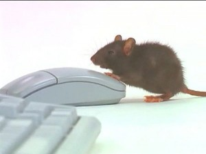 mouse-click-main_Full