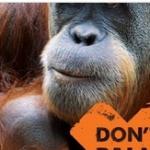 palm oil campaign