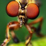 Bugs app
