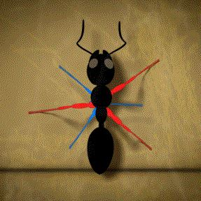 23 awesome facts -how an ant walks