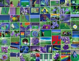 multicolor lab photos