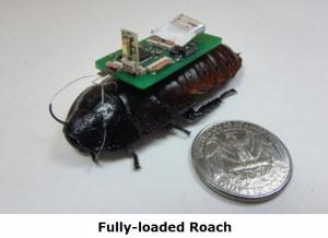 fully loaded roach