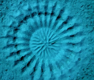 tiny_fish_to_the_right_of_center_makes_crop_circle_design_for_his_gal