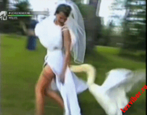 Wedding gif -swan likes bride's train