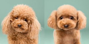 website -adorable pictures of dogs -before and after